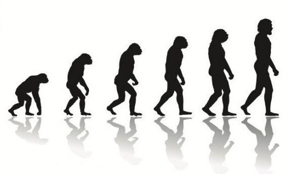 reguli evolutive