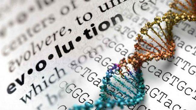 regularitățile și regulile de evoluție