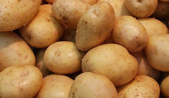 gândiți rădăcini de cartofi timpurii