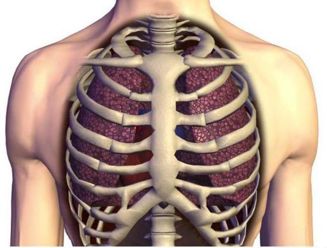 caracteristicile scheletului