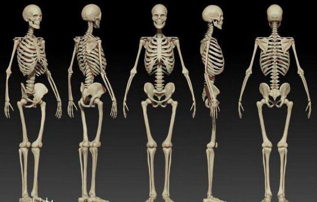 care este valoarea scheletului
