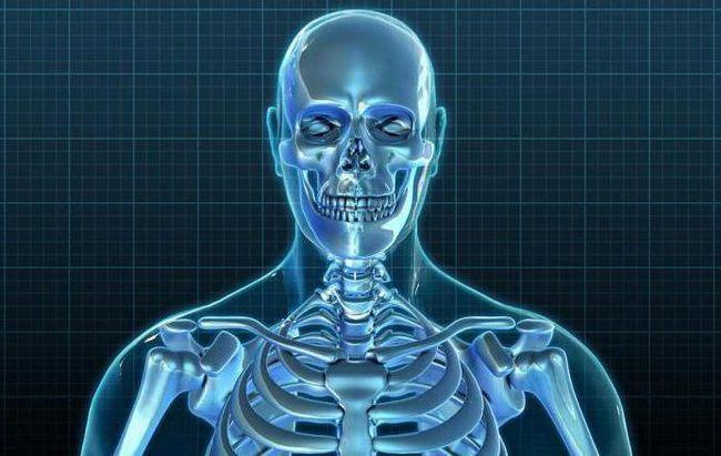 valoarea scheletului pentru oameni